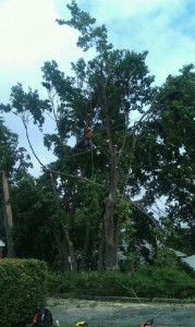 dutchess county tree removal companies