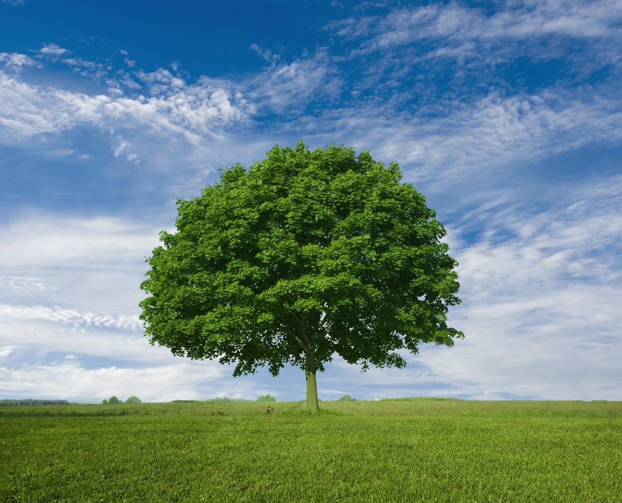 poughkeepsie tree companies