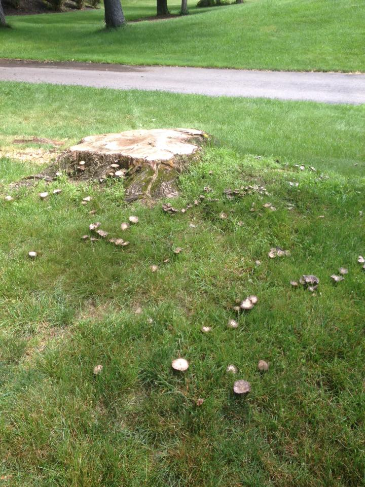 tree stump removal poughkeepsie